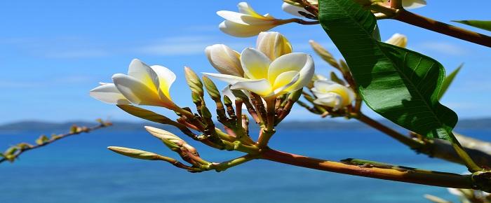 Fleurs de Madagascar